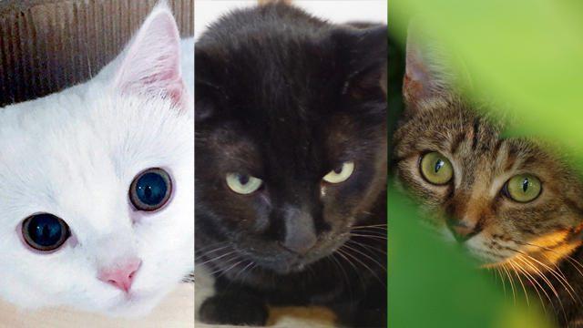 【今日は猫の日】あなたはどの猫がお好み?